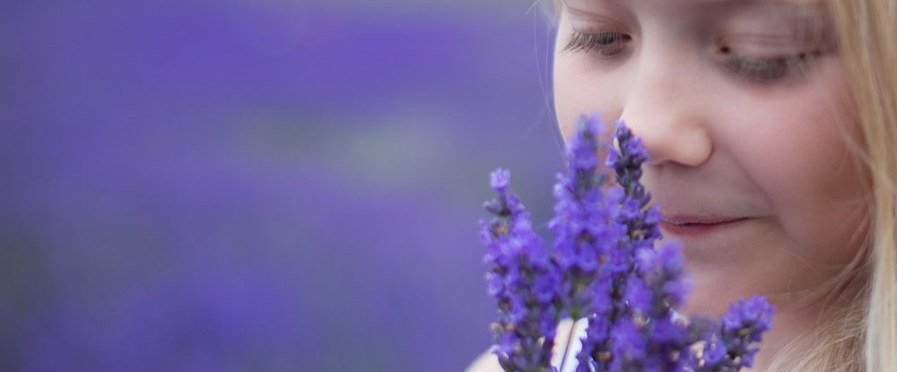 Hitchin Lavender Farm photography