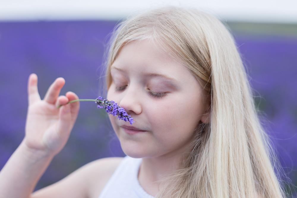 Hitchin Lavender Farm photography